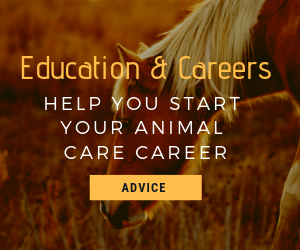 Ultimate animal care career guide
