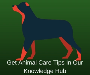 Animal Care Tips